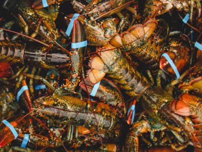 mlc-seafood1